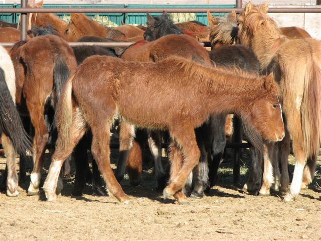 Save the american wild mustangs